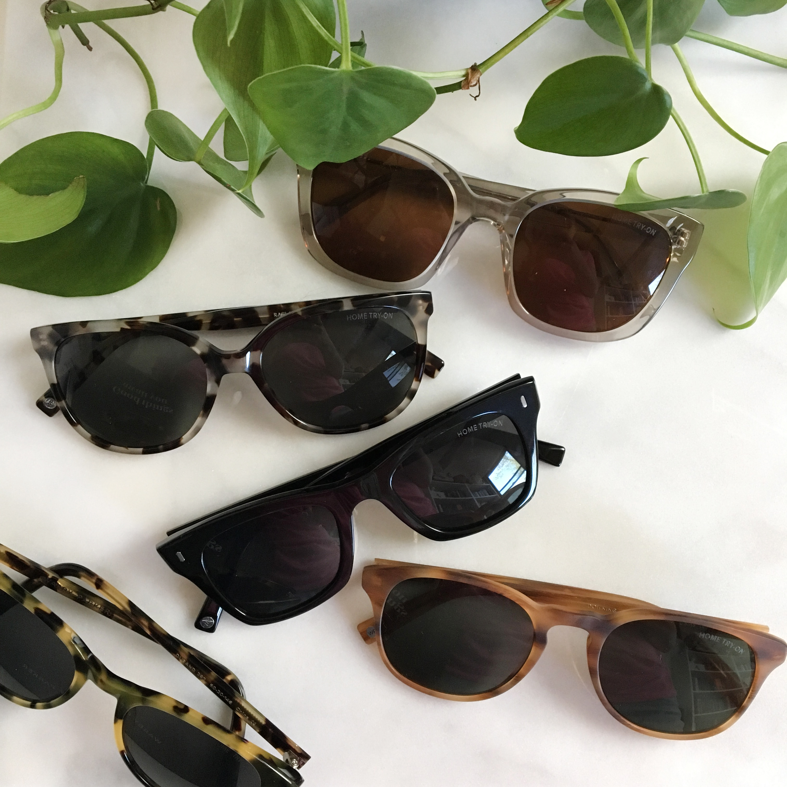 New warby parker sunglasses